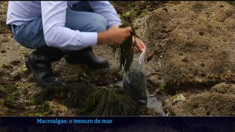 Investigadores de Galicia e Portugal buscan novos aproveitamentos para as algas