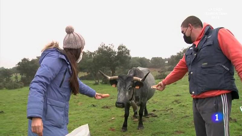 Aquí la Tierra - ¿Por qué les gusta tanto el pan a las vacas?