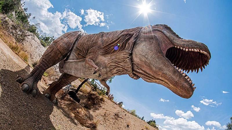 ¡Qué animal! - ¿Qué tienen en común una gallina y un Tyrannosaurus rex?