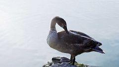 ¿Por qué las buenas fundas nórdicas o los anoraks están rellenos de plumas?