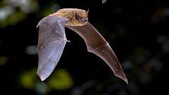 ¿Cuántas articulaciones tienen las alas de un murciélago?