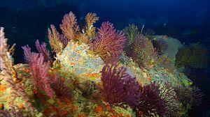 Corales resistentes