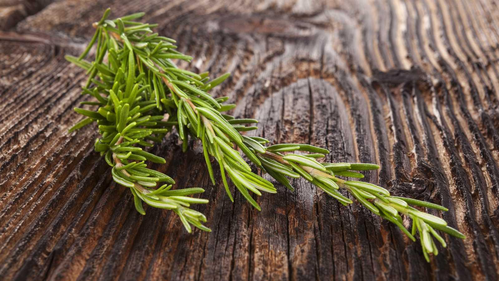 El sabor de las plantas aromáticas