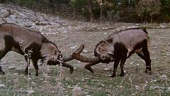 El hombre y la Tierra (Fauna ibérica) - Las sierras de Cazorla y de Segura II