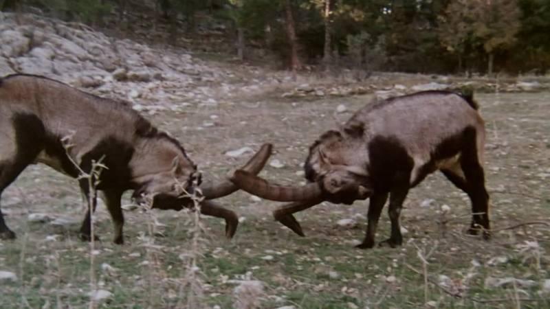 El hombre y la Tierra (Fauna ibérica) - Las sierras de Cazorla y de Segura II - ver ahora