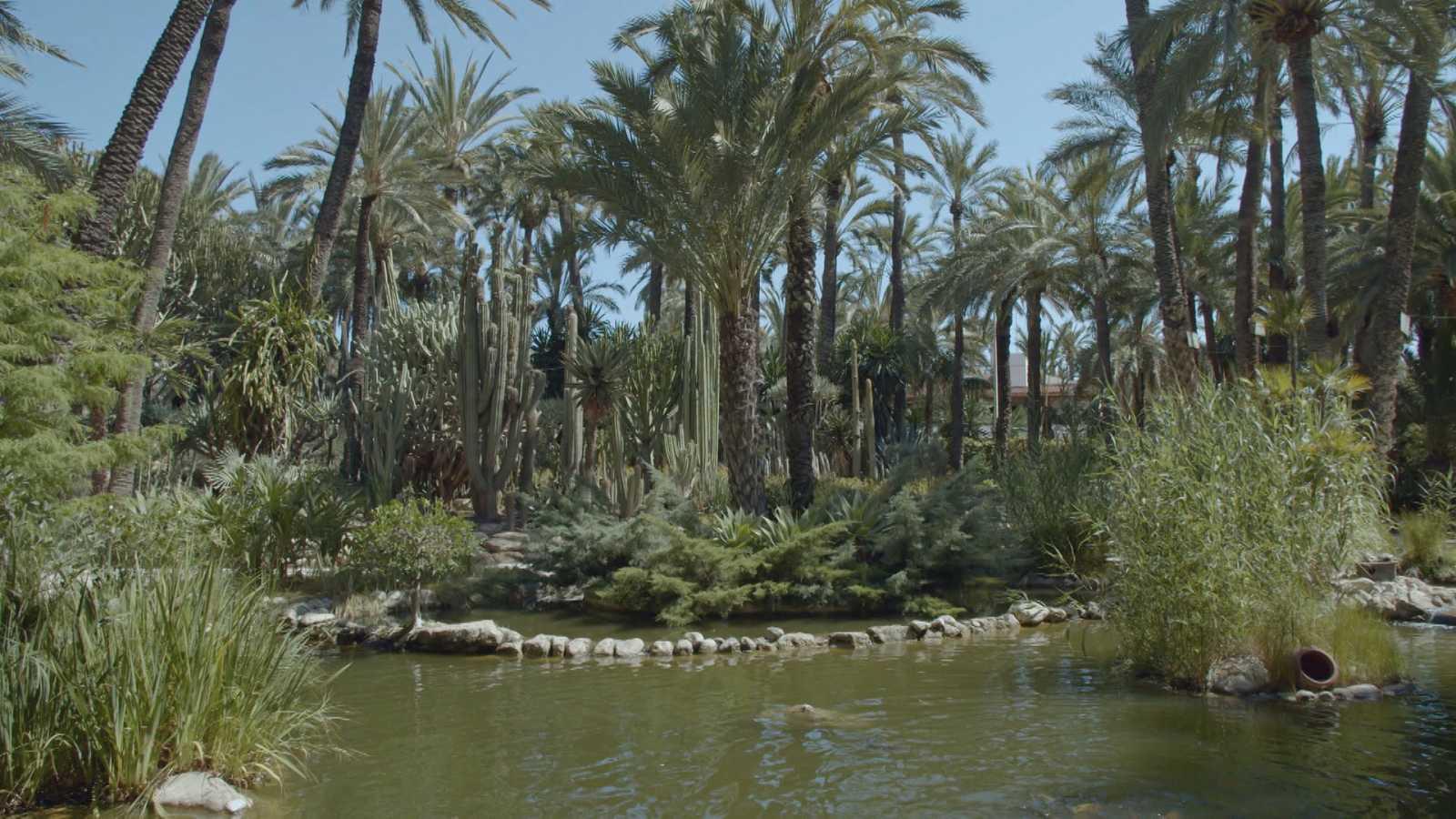 Jardines con historia - Alicante: Palmeral de Elche - ver ahora