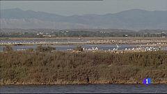 L'Informatiu Comunitat Valenciana 2 - 22/02/21