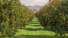 Aquí la Tierra - El Valle de Ricote, un oasis de árboles frutales en Murcia