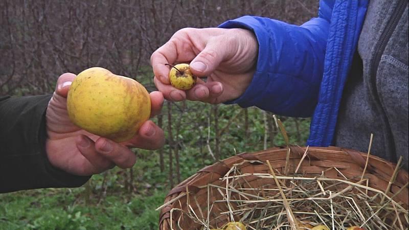 Aquí la Tierra - Conocemos la patxaka, manzana autóctona de Navarra