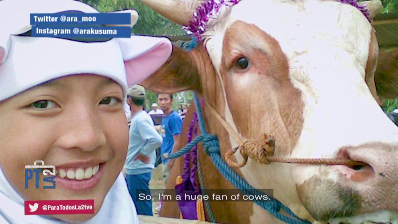 Renovar las granjas de vacas en Indonesia. Ara Kusuma