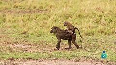 Grans Documentals - Masai Mara, la gran cacera