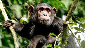 Hacer el mono