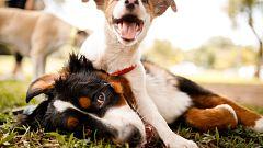 España Directo - Una vida dedicada a los perros