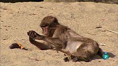Grans Documentals - Fer el mico