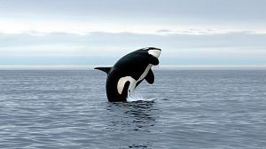 La Patagonia. La costa de las orcas