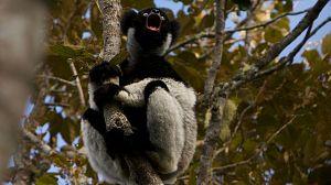 Planeta selva: La selva de los espíritus. Madagascar