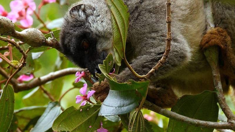 Grans Documentals - La selva dels esperits. Madagascar