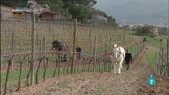 La Metro - Fauna a les vinyes