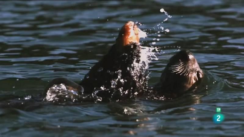 Grans Documentals - Súper sentits. Forces especials: Els Seals de la marina