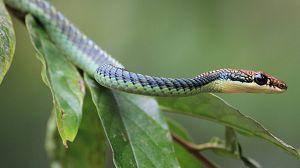 El reino secreto de Borneo: La selva de las serpientes