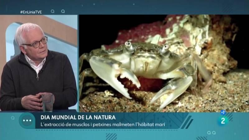 A En Línia parlem de la preservació de les espècies marines