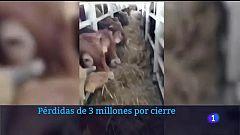 Pérdidas de 3 millones por la crisis del ganado en Cartagena