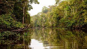 El reino secreto de Borneo: El rey del pantano