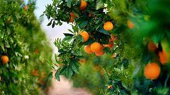Aquí la Tierra - Así de importante es el frío para algunos árboles frutales