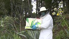 'Apadrina una abeja', un año de miel por proteger la especie