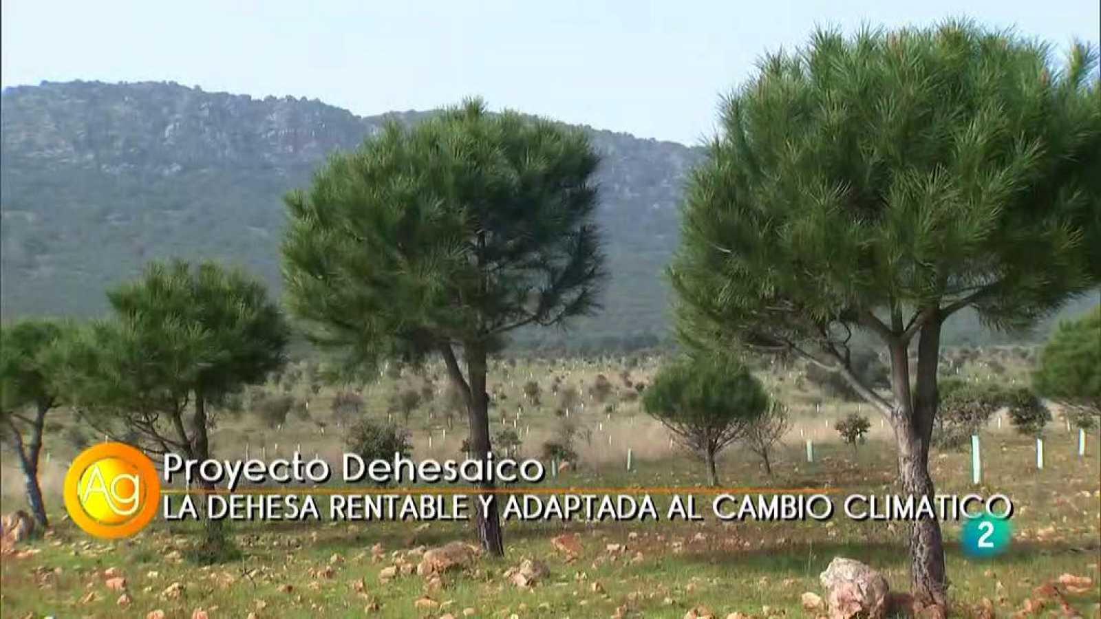 Proyecto Dehesaico #RTVEObjetivoIgualdad