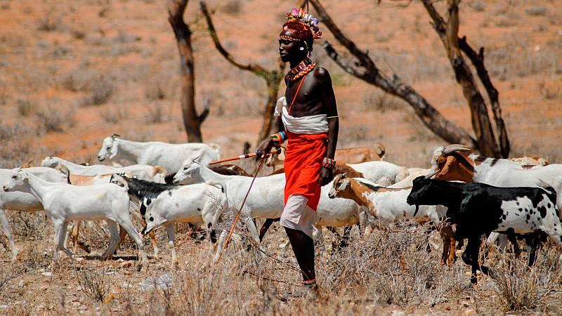Los leones ganan terreno a los pastores masáis y atacan a su ganado