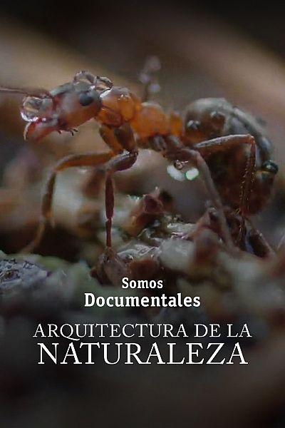 Arquitectos de la naturaleza