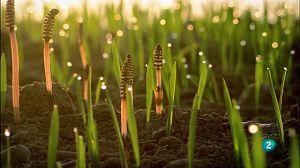 El camp de cereals: una jungla per a l'estiu