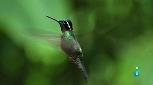 Planeta selva: Selves als núvols. Costa Rica