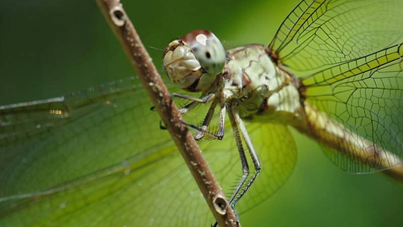 Planeta selva - Las ciénagas eternas. Florida - ver ahora