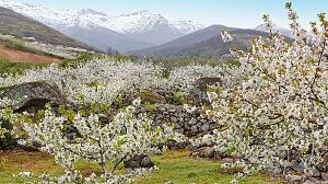 Jerte, vida salvaje en el valle de los cerezos