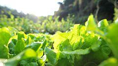 Aquí la Tierra - ¿Qué toca plantar en primavera? Dejamos la huerta de invierno atrás