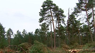 El bosque protector - Tierra de pinares, mar de pinos - ver ahora