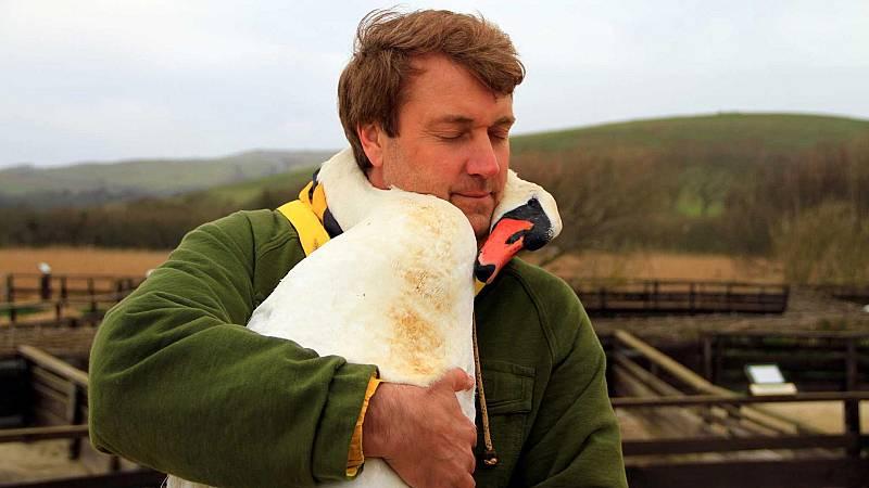 Nacido explorador - Inglaterra. Los cisnes de la reina - ver ahora