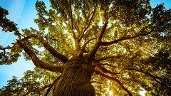 Aquí la Tierra - Conocemos el bosque con las cicatrices de los árboles