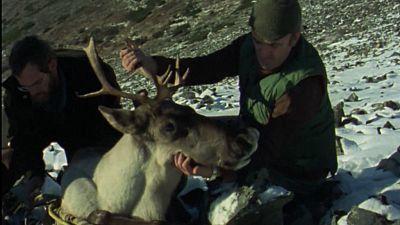 El hombre y la tierra (Serie canadiense) - Operación Caribu - ver ahora