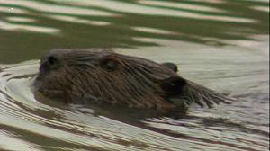 El lago de los castores