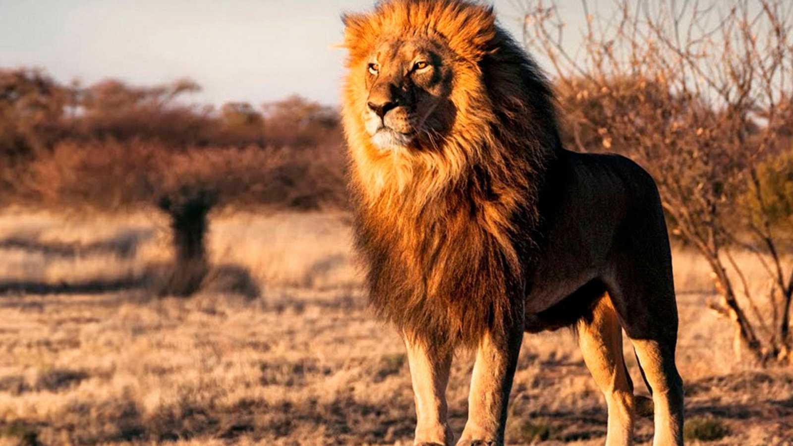 Grandes documentales - Supervivientes de la naturaleza: Atracción animal - ver ahora
