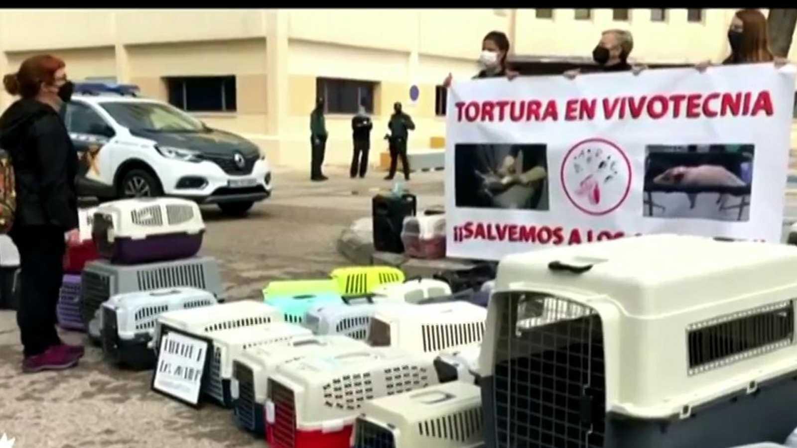 La Comunidad de Madrid suspende la actividad investigadora de Vivotecnia por presunto maltrato animal