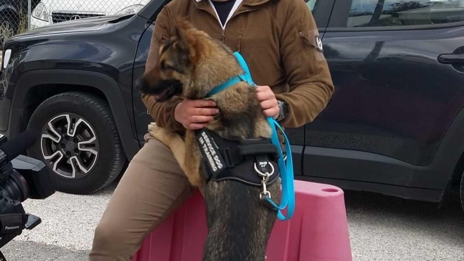 Un grupo de perros es adiestrado en Italia para detectar el coronavirus