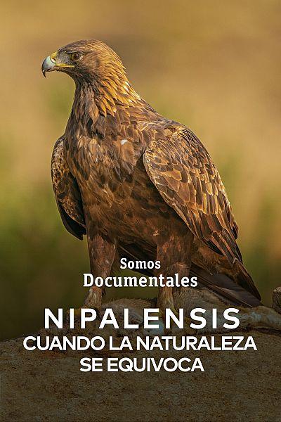 Nipalensis, cuando la naturaleza se equivoca