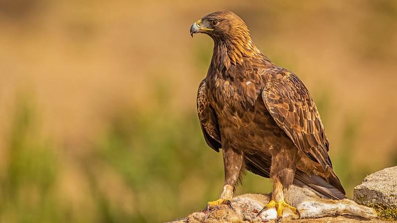 Somos documentales - Nipalensis, cuando la naturaleza se equivoca - ver ahora