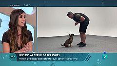 En Línia - Els gossos d'assistència i detecció