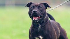 El Gobierno planea fijarse en la conducta y no en la raza para catalogar a perros peligrosos