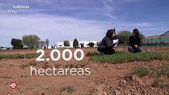 España Directo - 14/04/21